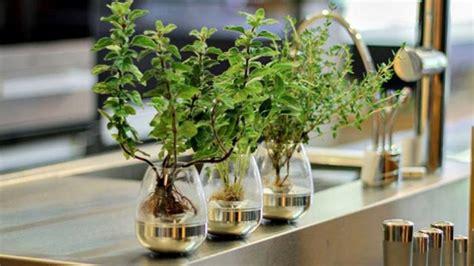merawat tanaman   rumah