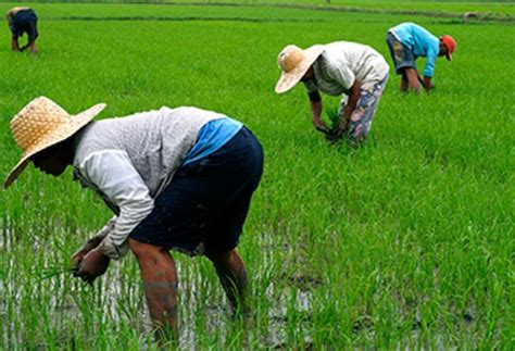 Philippine Records Phl Agriculture Records 1 78 Growth Business News The Philippine Philstar