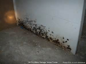 Cost To Remove Mold In Basement Tampa Mold Removal Mold Removal In Tampa Fl Moldtampa