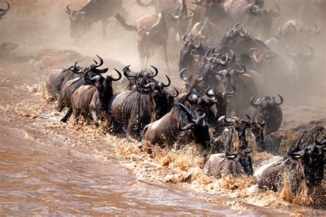 swing migration migration in full swing a2a safaris