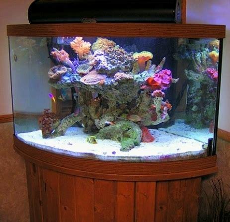 ghiaia acquario dolce acquario dolce acquari caratteristiche dell acquario