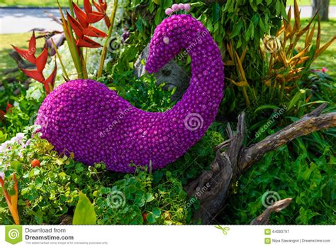 a shaped garden flower flower garden is shaped peacock stock photo image 64083797