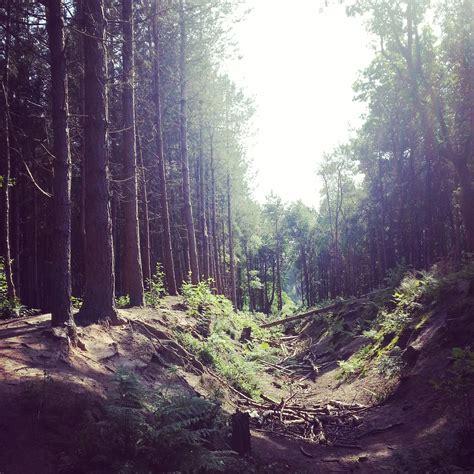 dog walking  delamere forest holly  lightly