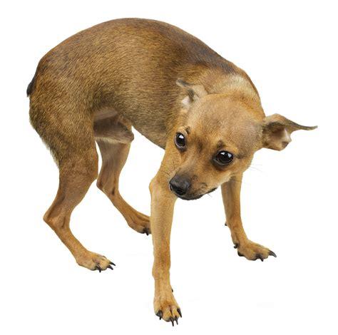 scared puppy understanding fear in dogs lucky leashlucky leash