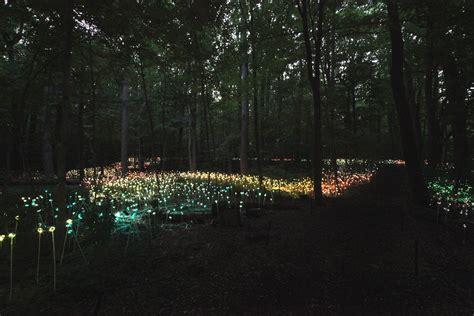 of lights a garden of light garden housecalls