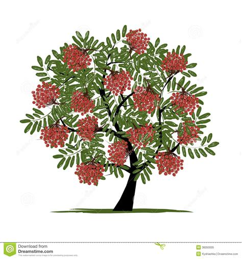 rowan tree with berries for your design stock vector