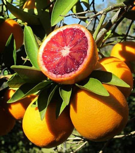 Patio Orange Tree by 204 Best Images About Ideas For The House On