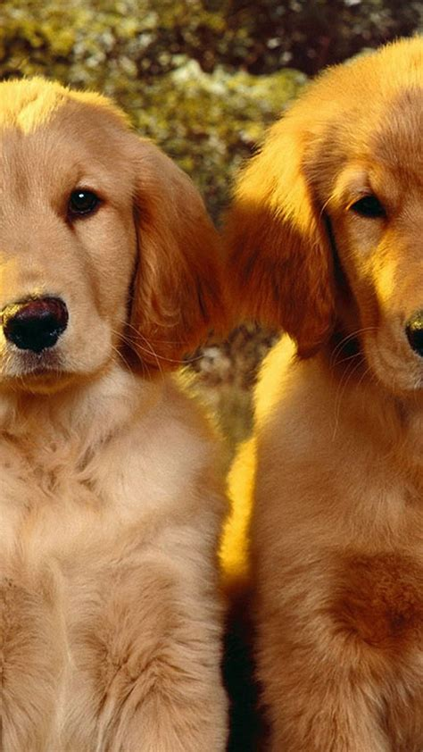 cute dog wallpapers for android desktop wallpaper box download android wallpaper cute puppies full size 2018