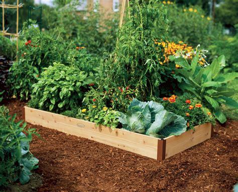 starting  raised bed vegetable garden faqs