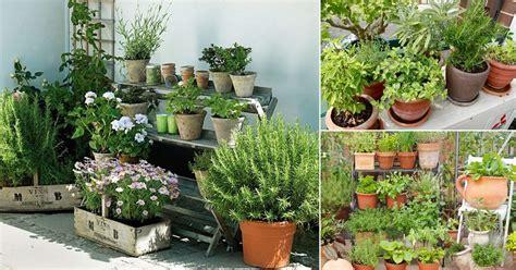 apartment herb garden tips apartment gardening
