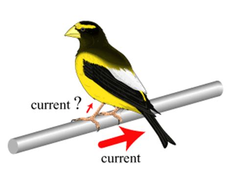 don t get high said the bird to the fly books power production transmission and distribution of