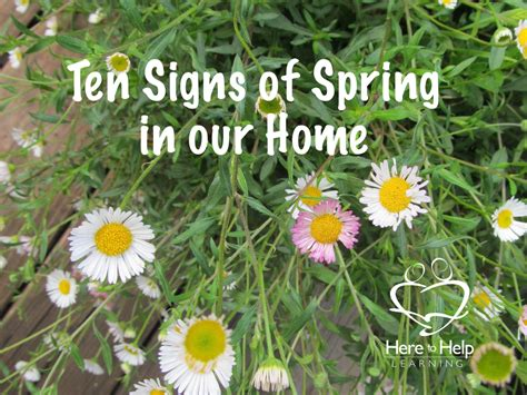 what is a spring ten signs of spring in our home