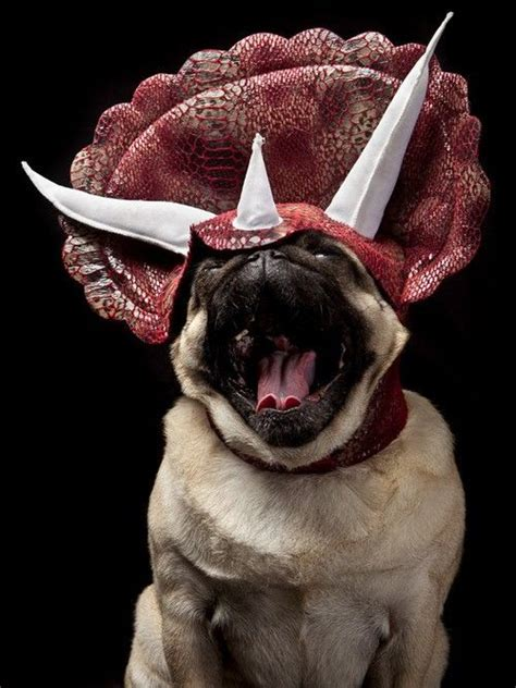 pug dinosaur costume 113 best pugs images on