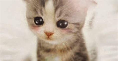 wallpaper anak kucing imut anak kucing imut lucu sekali android wallpaper binatang