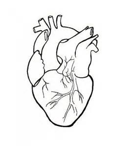 best 25 anatomical heart drawing ideas on pinterest