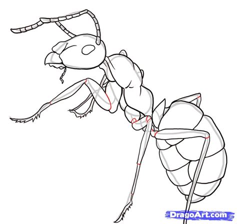 simple ant body   draw ants step    bugs