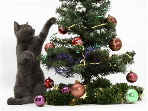 cat christmas tree wallpapers cat christmas tree stock