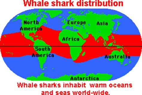 whale sharks on emaze