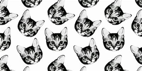 hipster tumblr oh lindo pinterest kitty cats 1000 images about hipster cats on pinterest cat art