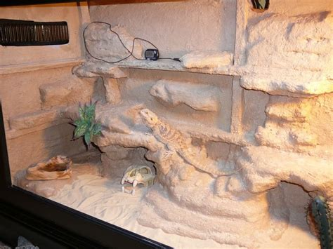 Bearded Decor Ideas by 1000 Images About Bearded Dragons On