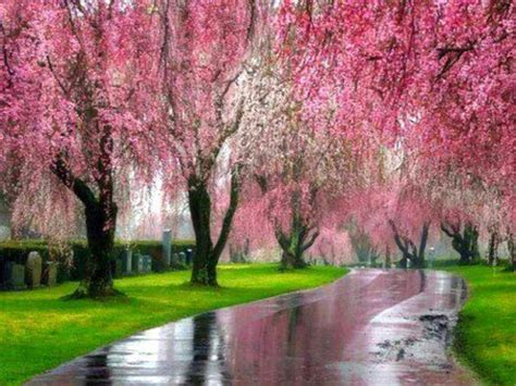 pink weeping willows dragonfly dreams new beginnings