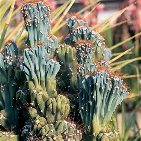 giardini piante grasse per esterno giardini