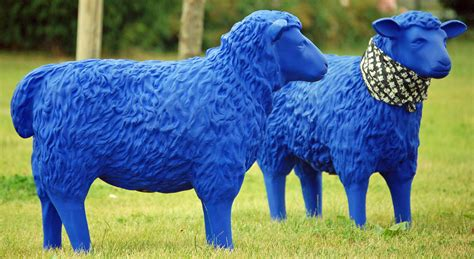 Blue Sheep by File Blue Sheep 04 Jpg Wikimedia Commons
