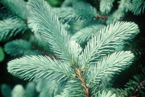 best type of tree for tree varieties
