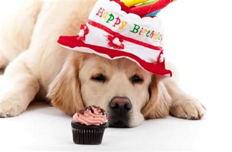 happy birthday puppy images birthday gift basket pictures slideshow d o g g i e o f t h e d a y
