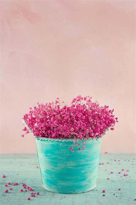babys breath flowers   blue vase stock photo image