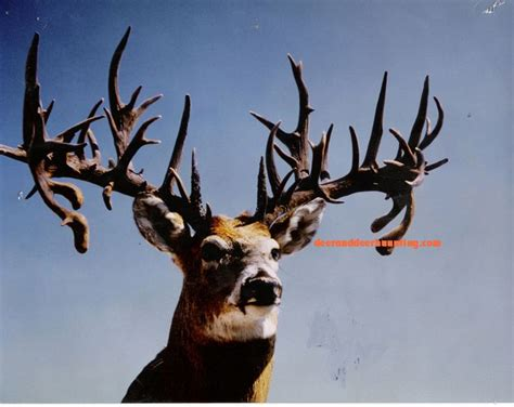 Deer Rack In The World by Is This The Nontypical Whitetail Buck Killed