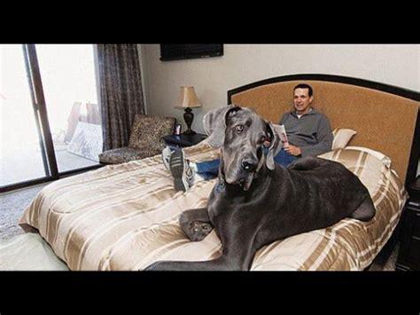 imagenes increibles grandes las 10 fotos incre 237 bles de los animales m 225 s grandes de su
