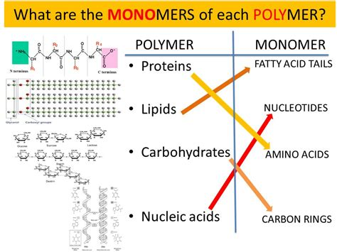 carbohydrates a polymer what are the monomers of each polymer ppt
