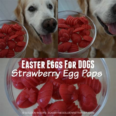 eggshells for dogs easter eggs for dogs strawberry egg pops golden woofs