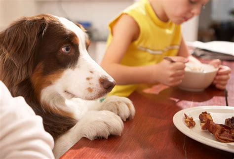 Table Food For Dogs by 7 Of Schools