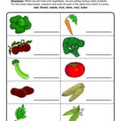 plant parts we eat worksheet
