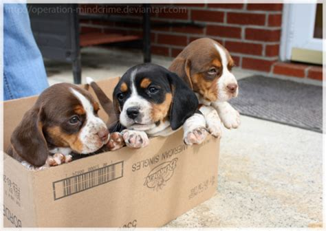 puppies in a box wormhole page 9842 oneplus forums