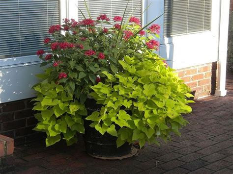 plan now annual flower containers