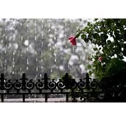 Download Rainy Season Wallpaper Gallery