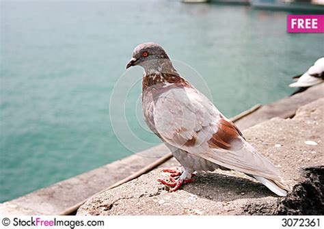 brown and white city dove free stock photos images