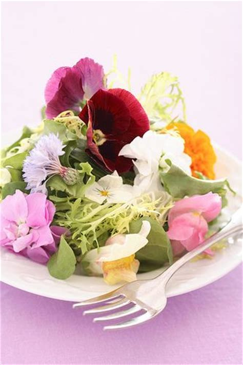 edible paint india 23 best edible flower information images on