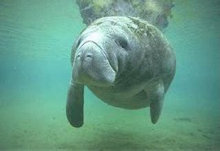 Manatee Glens Detox Center by Manatee Animal Wildlife
