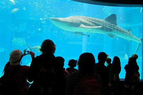largest and best aquariums in the world 2017 top 10 aquariums world cities ranking bonus list