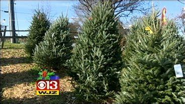 baltimore county christmas tree recycling starts monday