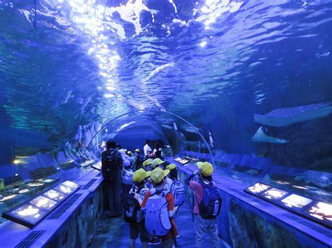 japanese aquarium 10 best aquariums in and around tokyo to make everyone