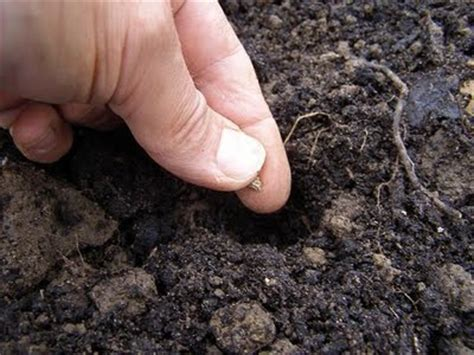 seed soil season find your purpose in life