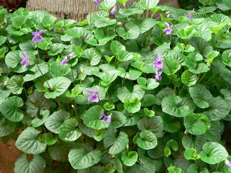 Herbal Plants Winter Medicinal Plants