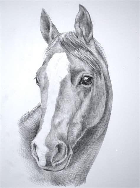 Sketches Horses by Pencil Drawings Of Horses Drawing Sketch Galery
