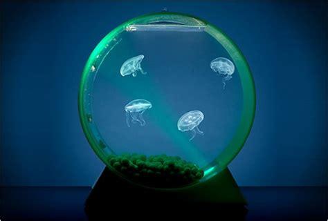 design quallen aquarium aussergewoehnliches design fuer aquarien kunstop de