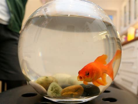 burglars rob family home  save goldfish  putting